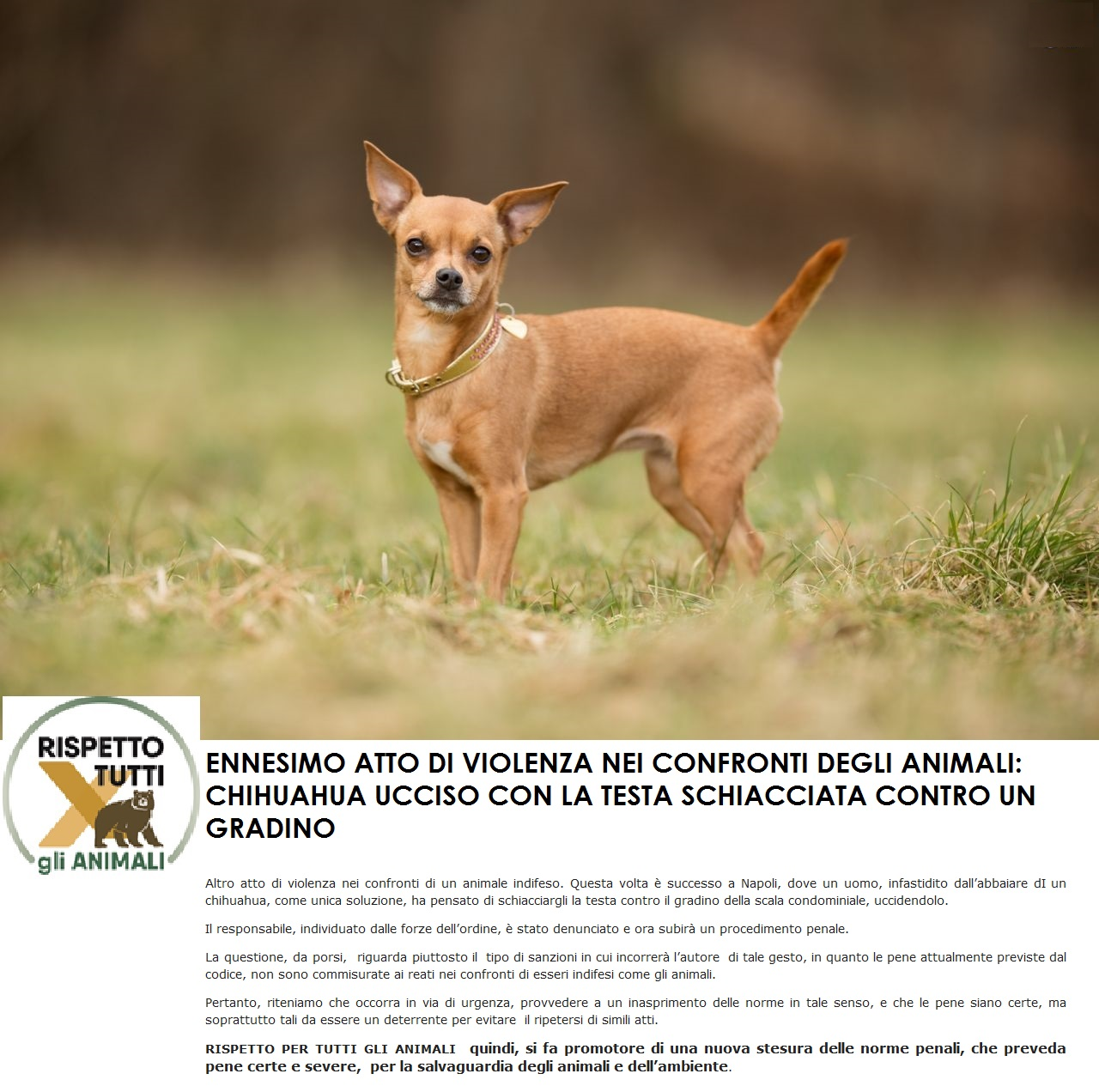 ENNESIMO ATTO DI VIOLENZA NEI CONFRONTI DEGLI ANIMALI