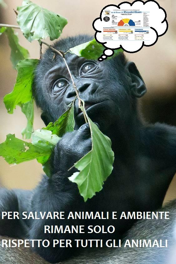per salvare animali e ambiente rimane solo rispetto per tutti gli animali