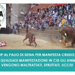 STOP AL PALIO DI SIENA PER MANIFESTA CRUDELTÀ VERSO GLI ANIMALI