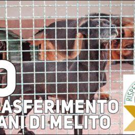 NO AL TRASFERIMENTO CANI  DI MELITO (NA) A ALTRO CANILE NON IDONEO