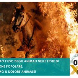 FERMIAMO L'USO DEGLI ANIMALI NELLE FESTE DI TRADIZIONE POPOLARE. FERMIAMO IL DOLORE ANIMALE!