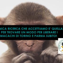 SPERIMENTAZIONE MACACHI TORINO E PARMA